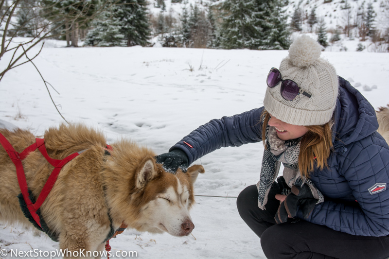 sofia husky sledding