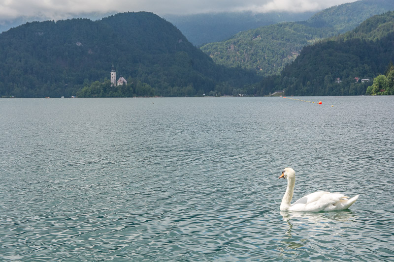 late bled