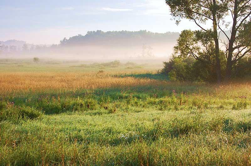 The swamp, Michigan