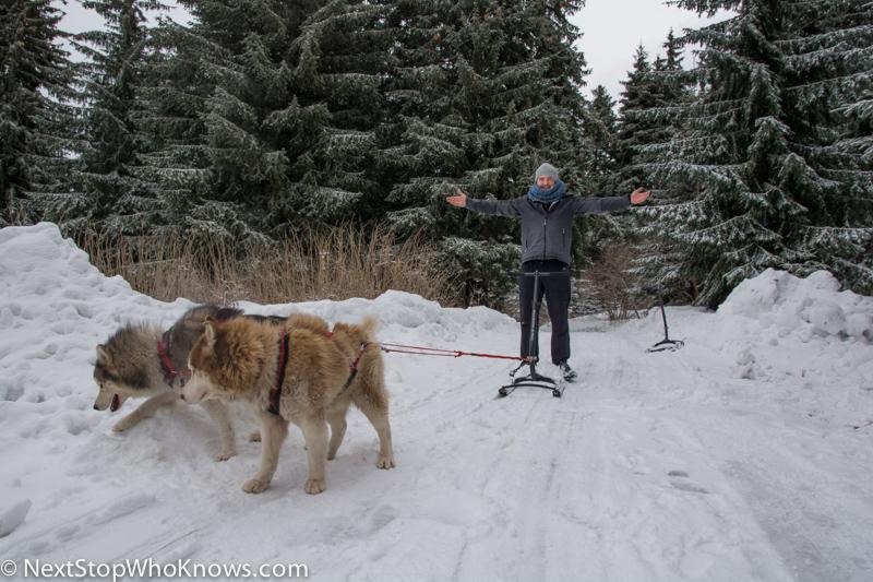 bulgaria husky sledding