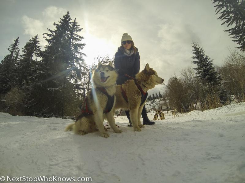 vitosha husky sledding