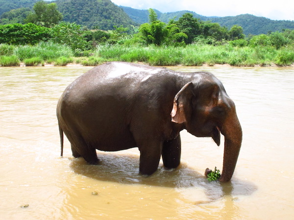 thailand elephant riding