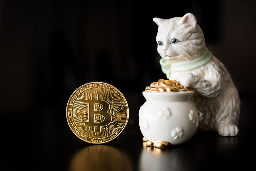bitcoin with cat and pot of gold